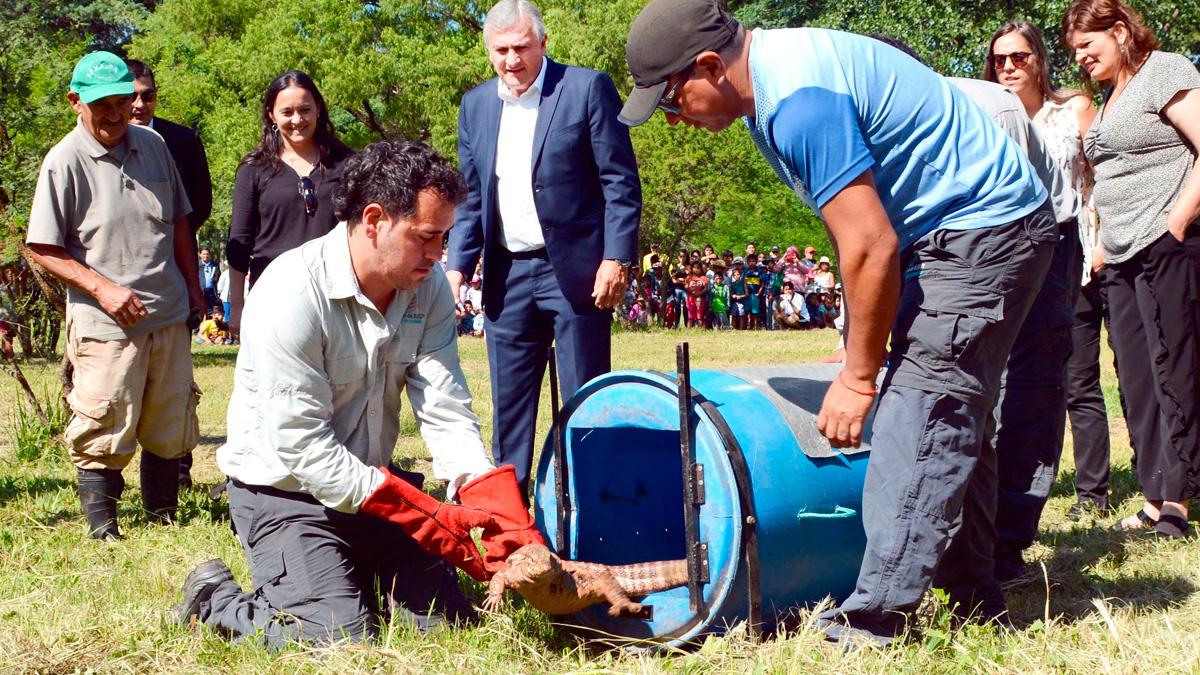 Jujuy: liberaron a animales silvestres rescatados y rehabilitados